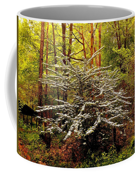 Males Sargentii Coffee Mug featuring the photograph Sargent Crabapple Tree by Shelley Smith