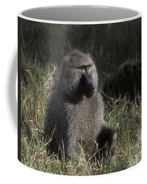 Baboon Coffee Mug featuring the photograph Savannah Olive Baboon by Sandra Bronstein
