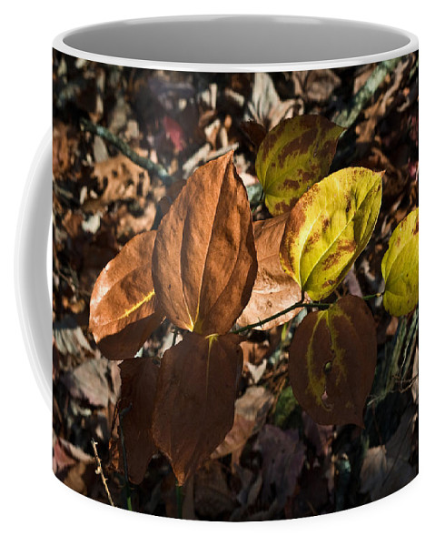 Sawbrier Coffee Mug featuring the photograph Sawbrier Or Greenbriar In The Fall by Douglas Barnett