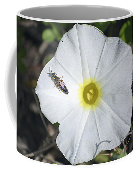 Sawfly Coffee Mug featuring the photograph Sawfly On A Beach Morning Glory Flower by Kenneth Albin