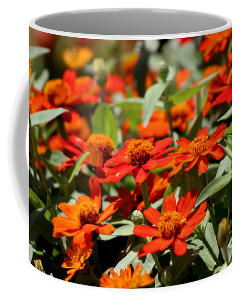 """Scarlet And Pumpkin Fall Zinnias"" Fine Art Photograph on Hot Cocoa Mug"