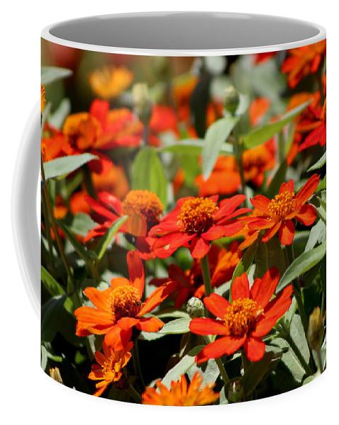 Pumpkin Orange Coffee Mug featuring the photograph Scarlet and Pumpkin Fall Zinnias by Colleen Cornelius