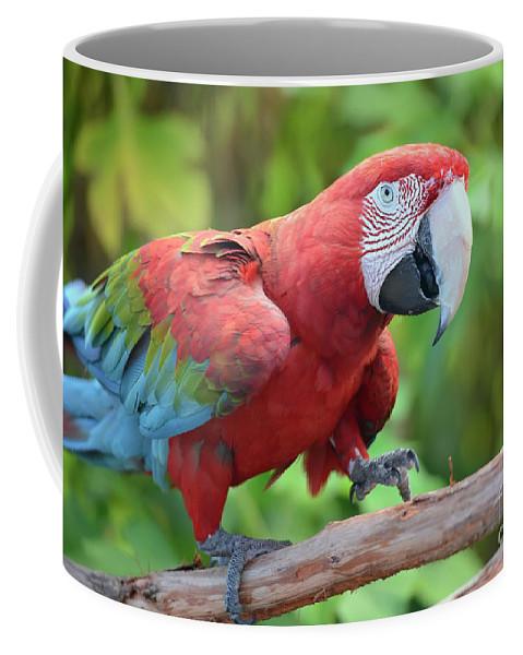 Scarlet Macaw Coffee Mug featuring the photograph Scarlet Macaw by Olga Hamilton