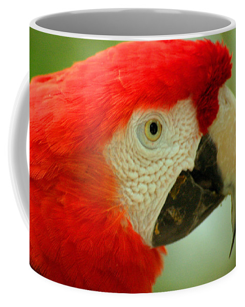Parrot Coffee Mug featuring the photograph Scarlett Macaw South America by Ralph A Ledergerber-Photography