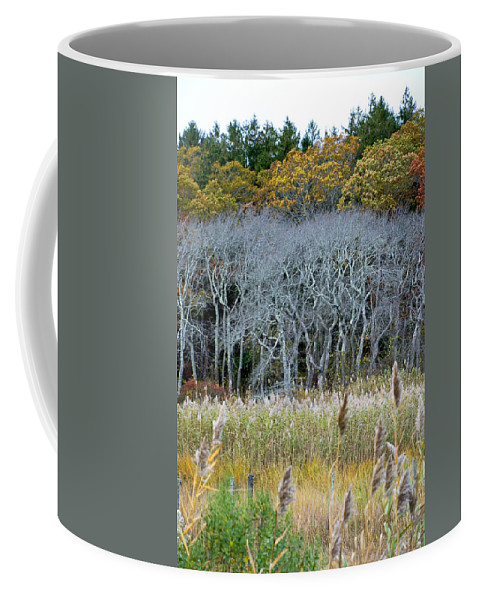 Scorton Coffee Mug featuring the photograph Scorton Creek Treeline by Charles Harden