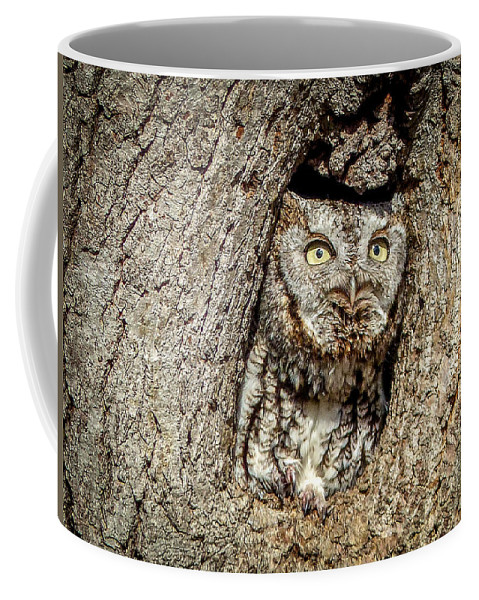 Owl Coffee Mug featuring the photograph Screech Owl by Richard Chasin