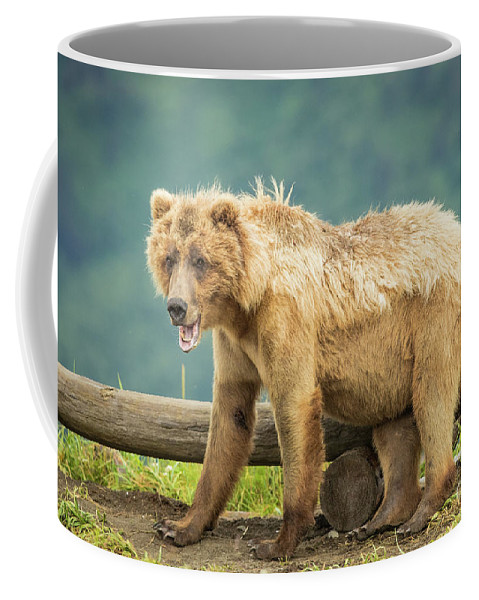 @lakeclarknps Coffee Mug featuring the photograph Scruffy by Rob Daugherty