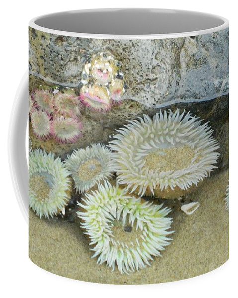 Oregon Coffee Mug featuring the photograph Sea Anemones by Gallery Of Hope