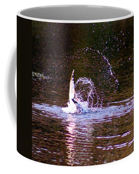 Karen Silvestri Coffee Mug featuring the photograph Sea Gull Abstract by Karen Silvestri