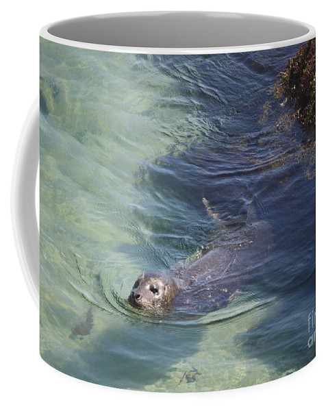 Sea Lion Coffee Mug featuring the photograph Sea Lion In Clear Blue Waters by Carol Groenen