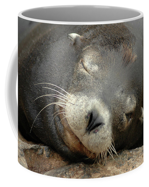 No Filter Coffee Mug featuring the photograph Sea Lion In San Francisco by Kristina Bliss