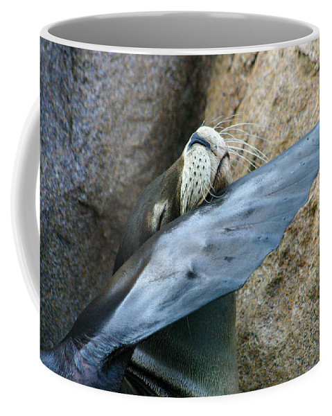 Sea Lion Coffee Mug featuring the photograph Sea Lion Itch by Anthony Jones