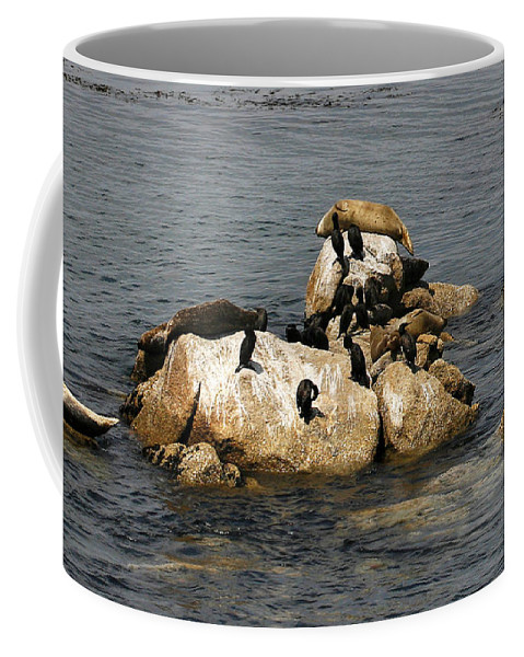 Pebble Beach Coffee Mug featuring the photograph Sea Lions And Birds by Marilyn Hunt