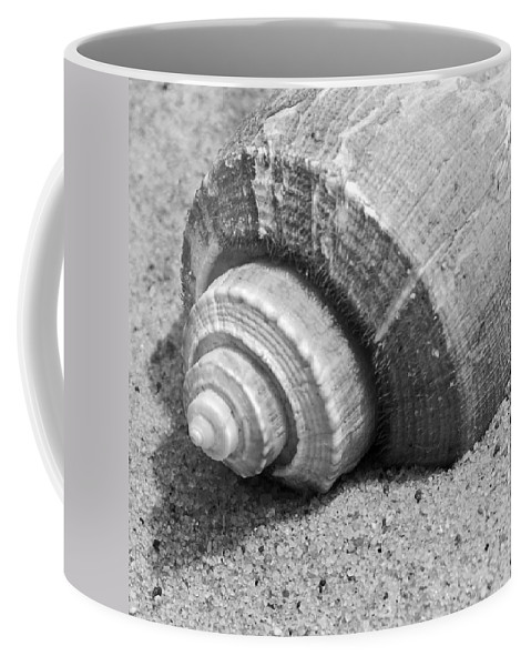Conch Coffee Mug featuring the photograph Sea Shell by Charles Harden