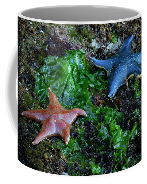 North America Coffee Mug featuring the photograph Sea Star by Christian Heeb