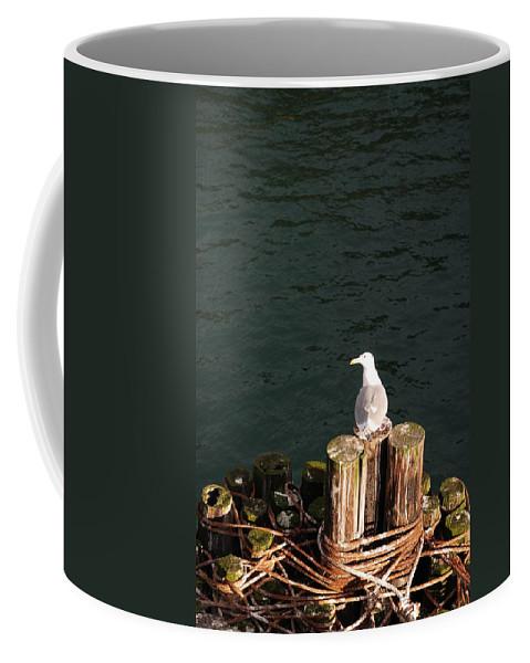 Seagull Coffee Mug featuring the photograph Seagull by Carol Eliassen