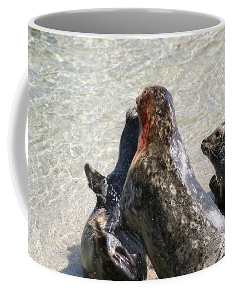 Seals Coffee Mug featuring the photograph Seal Fight by Anthony Jones