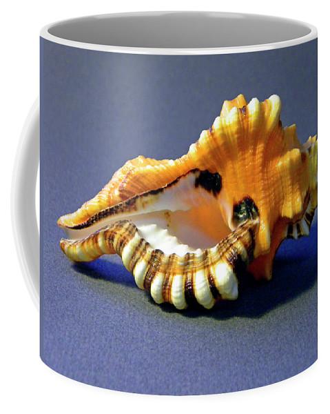 Frank Wilson Coffee Mug featuring the photograph Seashell Cymatium Lotoium by Frank Wilson