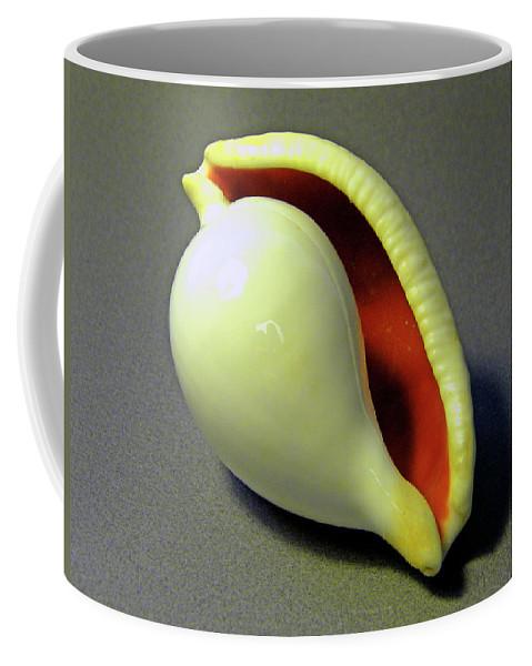 Frank Wilson Coffee Mug featuring the photograph Seashell Egg Cowry by Frank Wilson