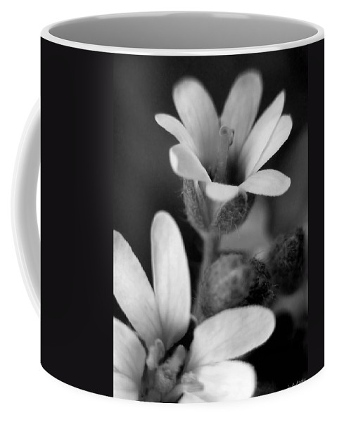 Lauren Radke Coffee Mug featuring the photograph Second Look by Lauren Radke