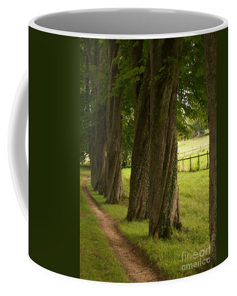 Secret Coffee Mug featuring the photograph Secret Path by Mary Mikawoz