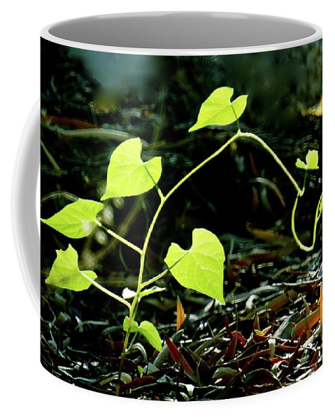 Botanical Coffee Mug featuring the photograph Seedling by Bonnie See