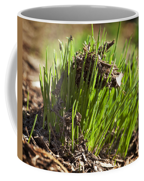 Grass Coffee Mug featuring the photograph Seedlings by Kelley King