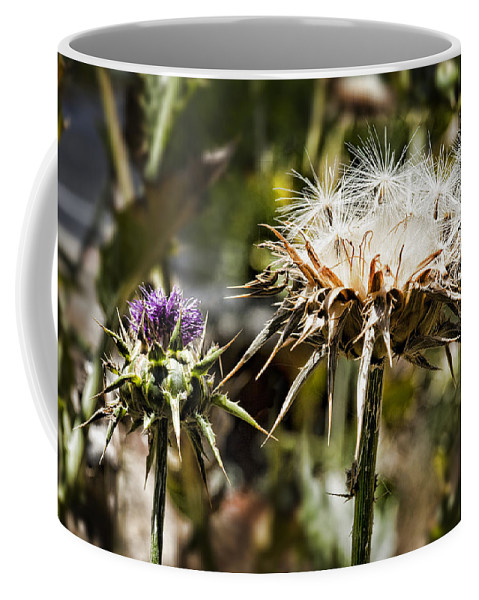 Artichoke Thistle Coffee Mug featuring the photograph Seedy Neighborhood by Kelley King