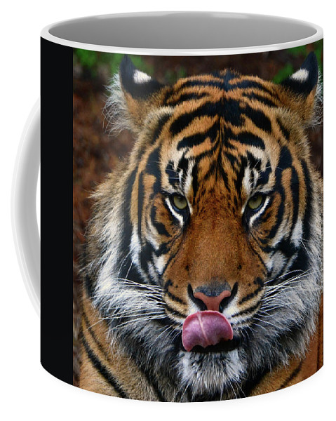 Tiger Coffee Mug featuring the photograph Send More Tourists by James Farrell