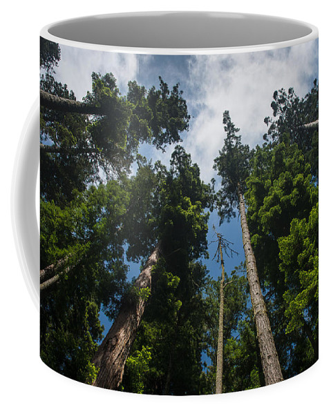 Redwoods Coffee Mug featuring the photograph Sequoia Park Redwoods Reaching To The Sky by Greg Nyquist