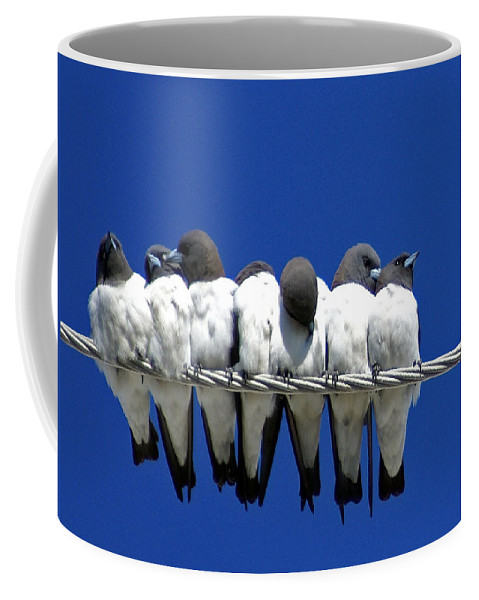 Animals Coffee Mug featuring the photograph Seven Swallows Sitting by Holly Kempe