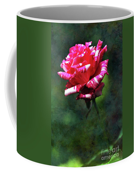 Photography Coffee Mug featuring the photograph Sexy Rexy Rose by Kaye Menner