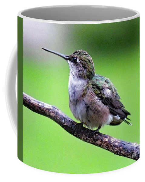 Ruby-throated Hummingbird Coffee Mug featuring the photograph Shades Of Green - Ruby-throated Hummingbird by Cindy Treger