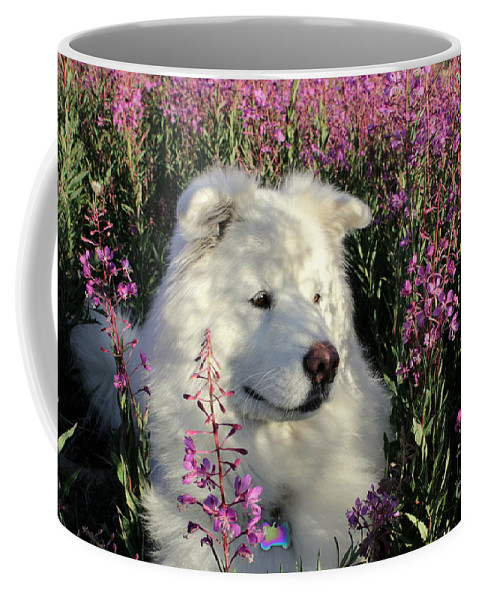 Samoyed Coffee Mug featuring the photograph Shadows by Fiona Kennard