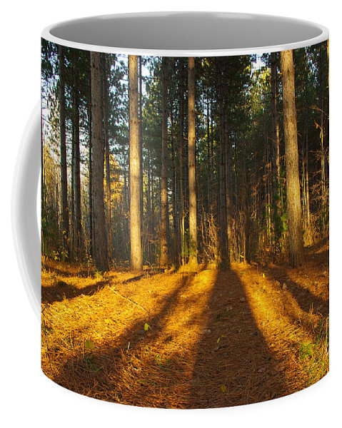 Trees Coffee Mug featuring the photograph Shadows In Forrest by Zalman Latzkovich