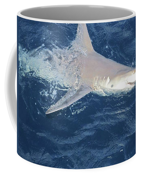 Shark Coffee Mug featuring the photograph Shark by Anthony Schafer