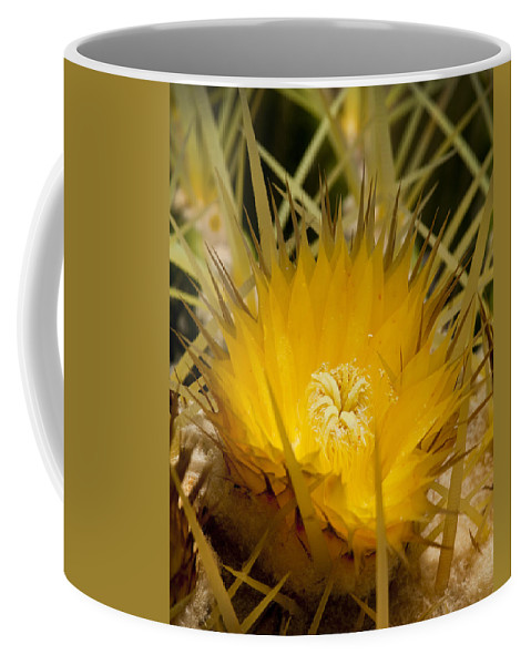 Yellow Cactus Flowers Coffee Mug featuring the photograph Sharp Yellow by Kelley King
