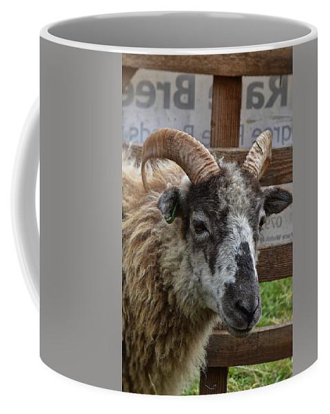 Sheep Coffee Mug featuring the photograph Sheep One by Mark Hunter