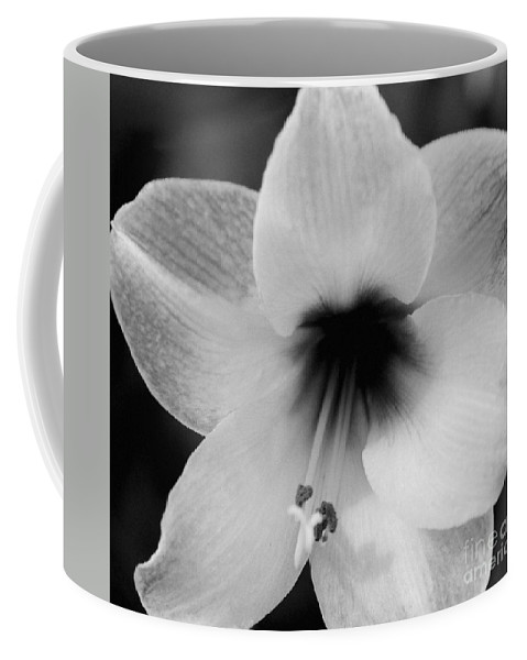 #amaryllis Coffee Mug featuring the photograph Sheer Amaryllis by Kathleen Struckle