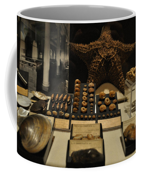 Peggy Notebaert Nature Museum Coffee Mug featuring the photograph Shell Collection by Kyle Hanson