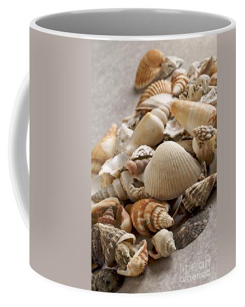 Crustacean Coffee Mug featuring the photograph Shellfish Shells by Bernard Jaubert