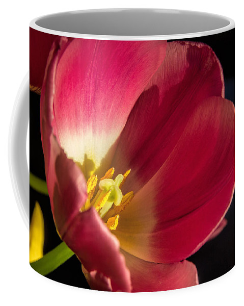 Botanical Coffee Mug featuring the photograph Shine On Me by Alana Thrower
