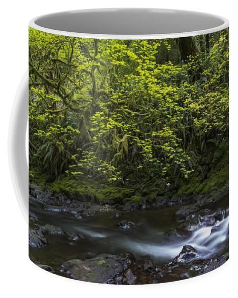 Cascades. Water. Flow. Forest. Clatsop County Coffee Mug featuring the photograph Short Sands Creek by Robert Potts