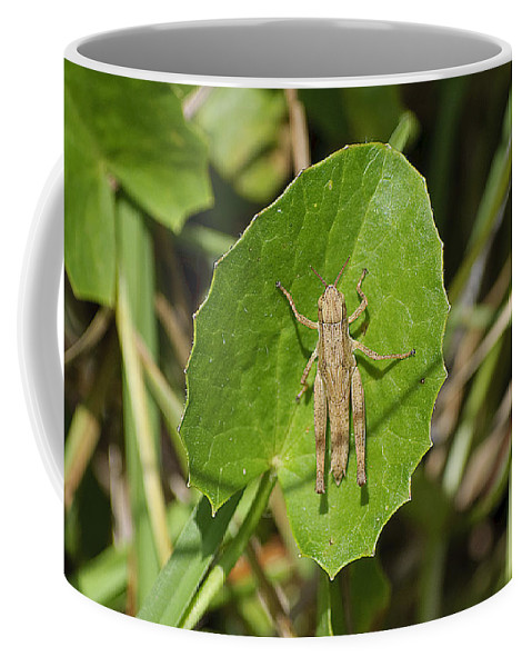 Grasshopper Coffee Mug featuring the photograph Shortwinged Green Grasshopper by Kenneth Albin