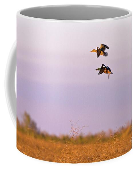 Ducks Coffee Mug featuring the photograph Shoveler Pair by Scott Pellegrin
