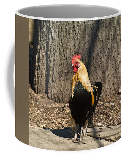 Rooster Coffee Mug featuring the photograph Showy Rooster Posed by Douglas Barnett