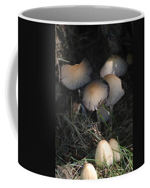 Digital Photograph Coffee Mug featuring the photograph Shrooms 1 by David Lane