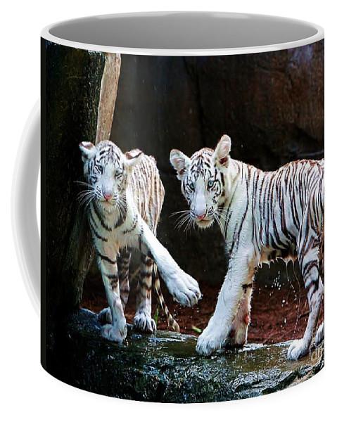 Tiger Coffee Mug featuring the photograph Siberian Tiger Cubs by Randy Matthews