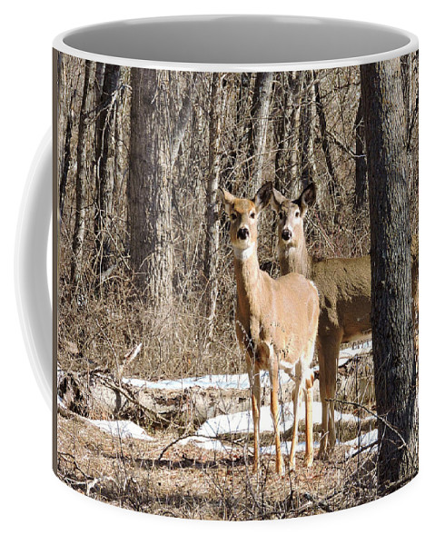 Mountains Coffee Mug featuring the photograph Siblings by Eric Fellegy