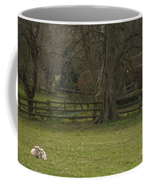 Sheep Coffee Mug featuring the photograph Silent Afternoon by Angel Ciesniarska